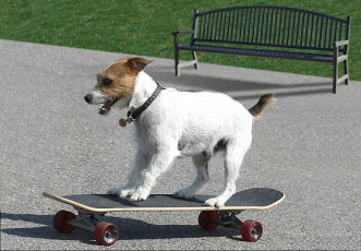 Wild packs of skateboarding dogs abusing park benches?