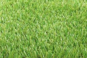 Ameri-Grass great for schools because its low-maintenance
